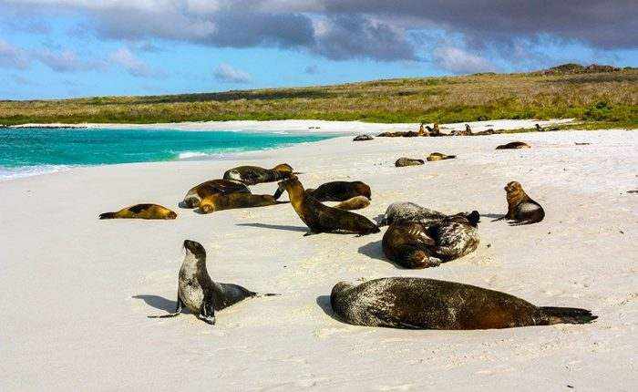 Sea Lions In Galapagos Islands