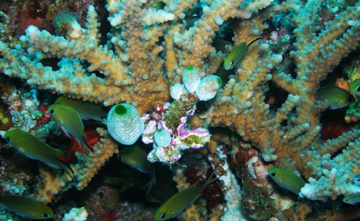 Fishes Undersea Maldives Islands