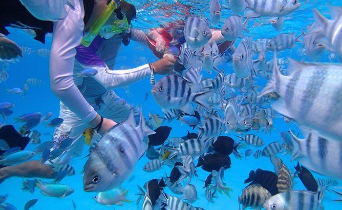 Snorkeling Bora Bora Islands